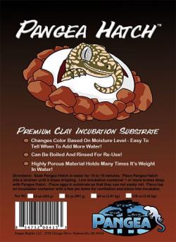 Pangea Hatch - Incubation...