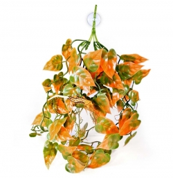 Pangea Plants - Orange