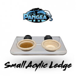 Small Pangea Magnetic Gecko...
