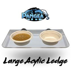Large Pangea Magnetic Gecko...