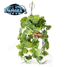 Pangea Plants - Green